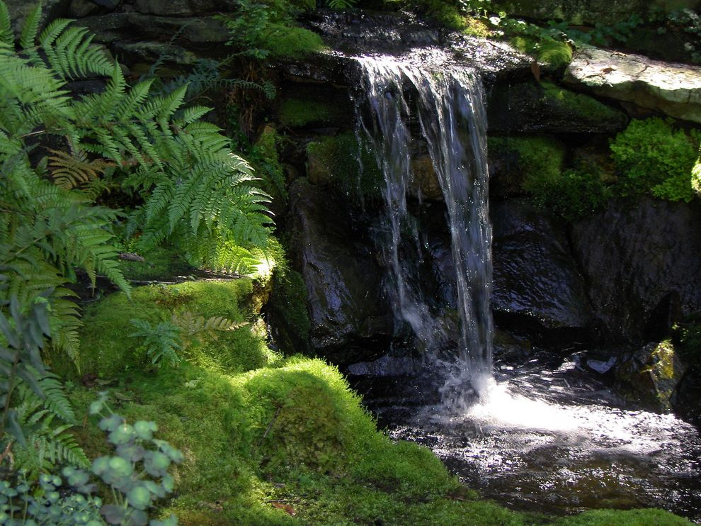 Amigo Power Equipment with Contemporary Landscape Also Moss Water Garden Waterfall Woodland