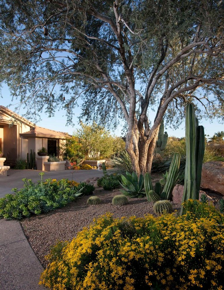 Cactus Forty 2 With Southwestern Landscape And Bushes