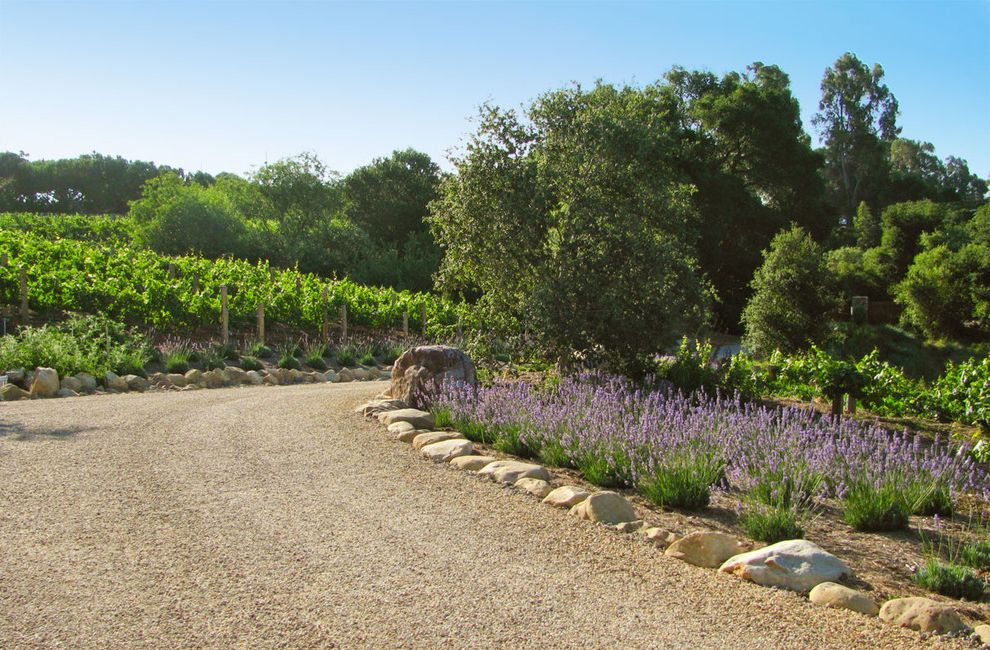 Chip Seal Driveway with Mediterranean Landscape and Boulders Curved Flowers Garden Gravel Path Hardscape Lavender Plants Trees Vineyard Walkway