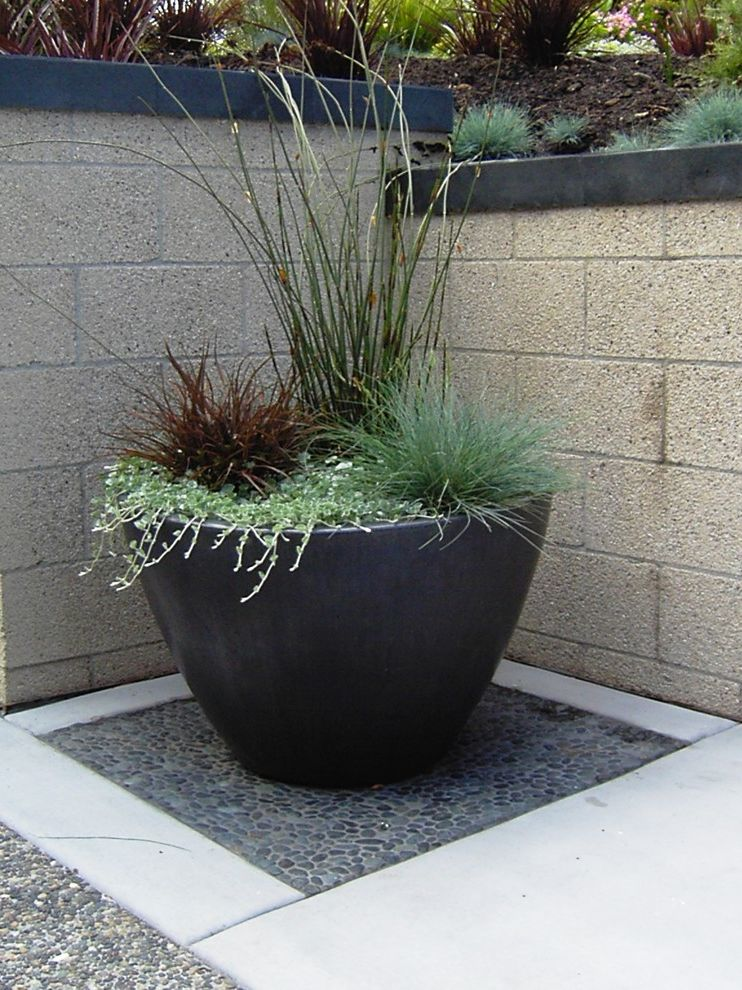 Chondropetalum Tectorum   Contemporary Landscape  and Chondropetalum Colored Concrete Dichrondra Exposed Aggregate Flax Grasses Pot Retaining Walls Sandblasted Block Walls Slate Wall Caps