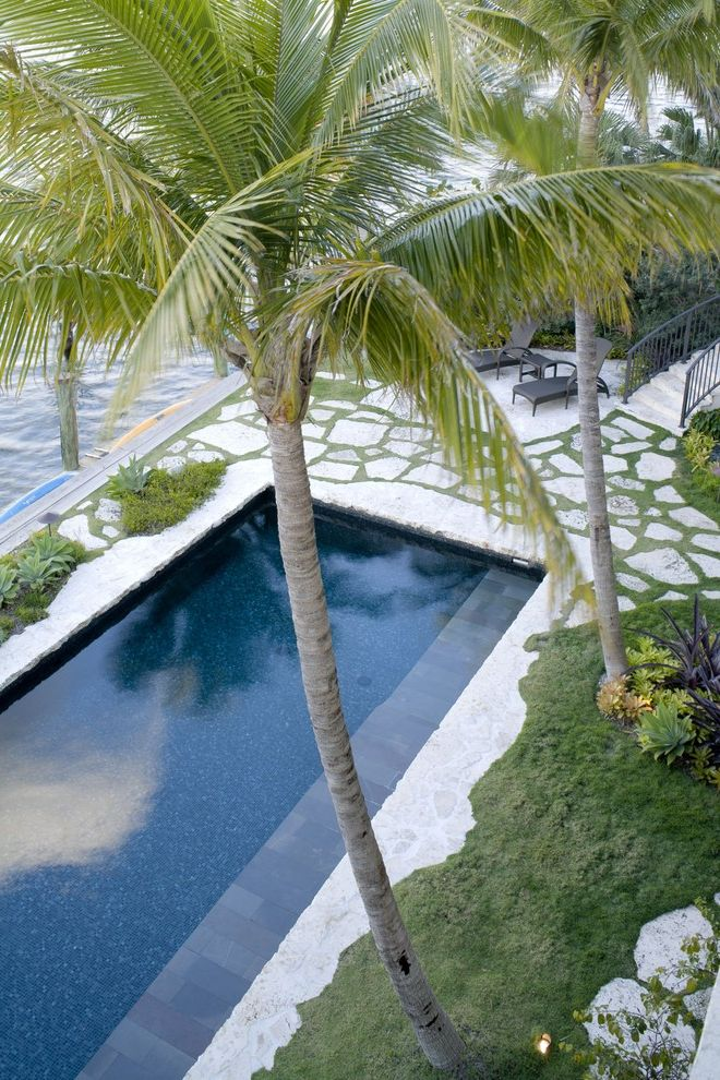 Clover Pools   Tropical Pool  and Agave Hillside Lap Pool Natural Stamped Flooring Palm Trees Patio Furniture Pavers Planting Between Pavers Slope Succulents Tropical Waterfront