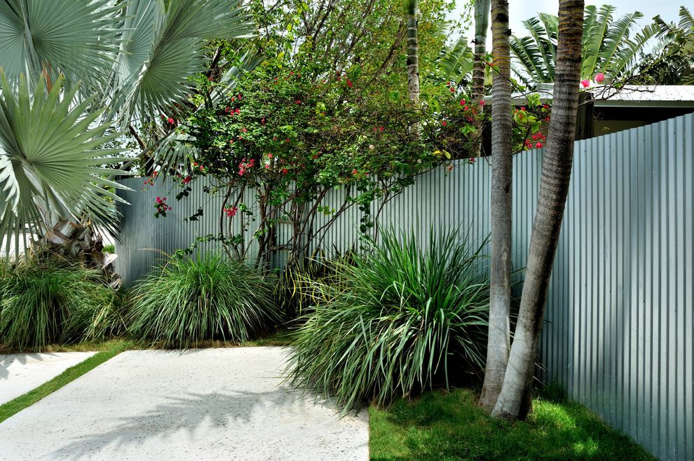 Corner Fence Landscaping   Contemporary Landscape  and Cgi Concrete Slab Corrugated Galvanized Iron Fence Flowering Trees Grass Lawn Ornamental Grasses Palm Trees