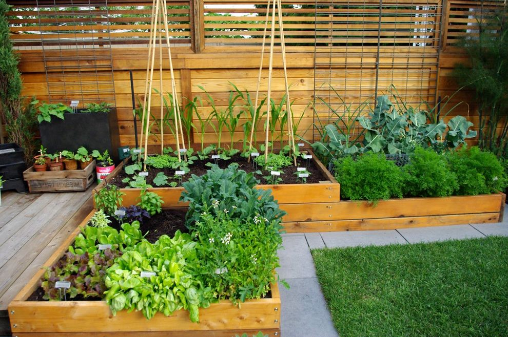Fastest Way to Get Weed Out of Your System with Contemporary Landscape  and Bushes Cedar Contemporary Back Garden Edible Garden Garden Plants Raised Vegetable Beds Shrubs Stone Patio Wood Deck Wood Fence Wood Planter Wood Raised Bed Wood Slat Fence