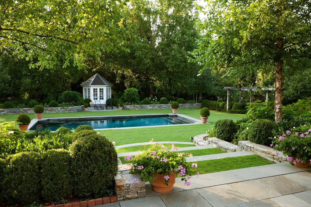 Fiberglass Pools for Sale   Traditional Landscape  and Boxed Hedgewood Green Lawn Steps Pergola Pool Trees White Gazebo