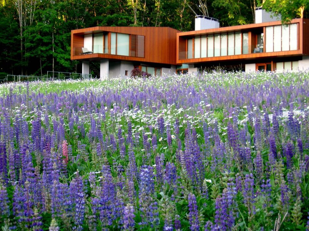 Flowers That Start with a   Modern Landscape Also Bnk Cantilever Field Flat Roof Mass Planting Meadow Purple Flowers Roof Line Wildflowers Wood Siding