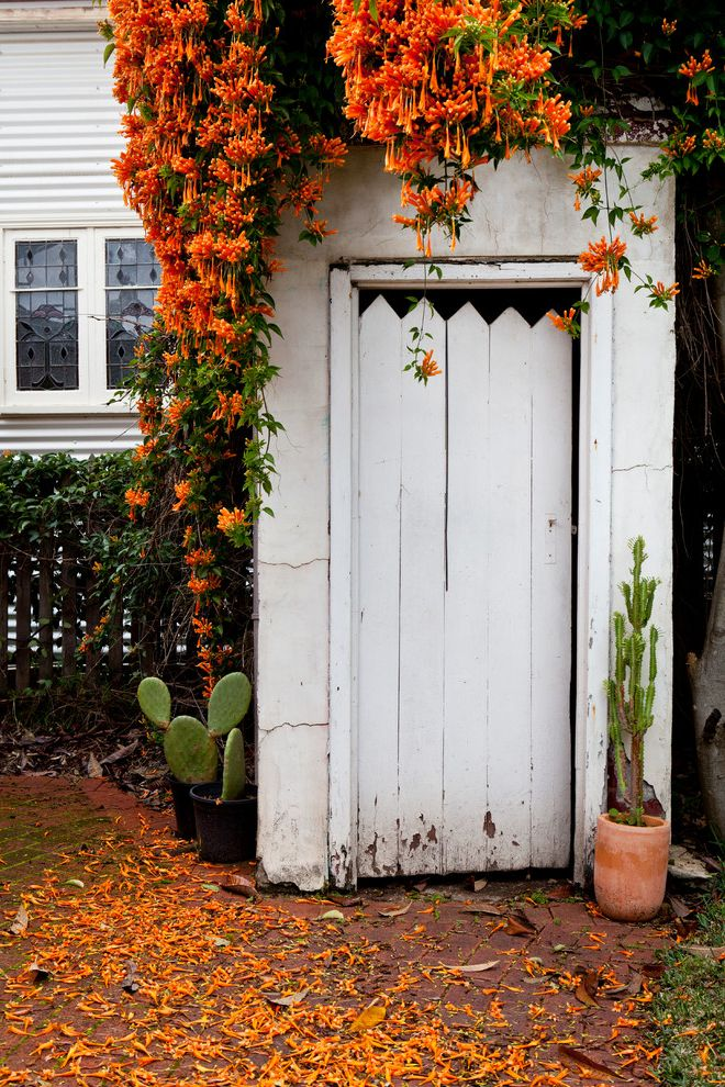 Flowers That Start with a with Shabby Chic Style Shed Also Aussie Australia Cactus Cottage Country Country Landscape Honeysuckle Old Orange Orange Flowers Outdoor Dunnies Outdoor Potted Plant Outdoor Toilet Rustic Small Shed Small Space Vine