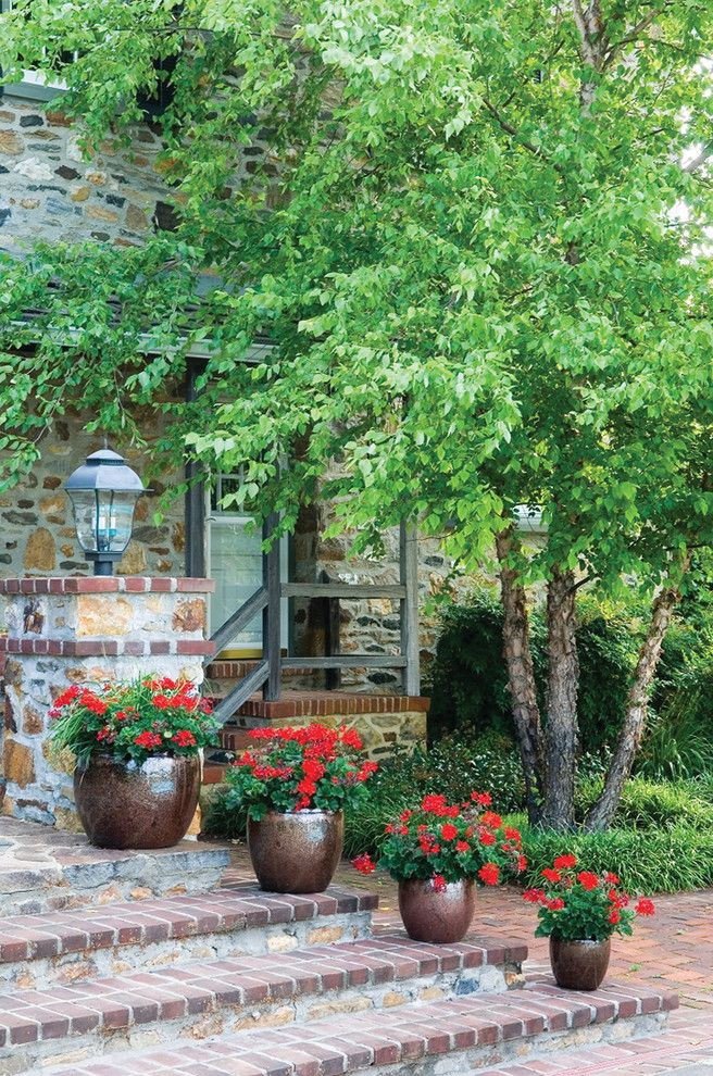 Flowers That Start with a with Traditional Landscape Also Annuals Birch Brick Steps Cottage Exterior Front Entrance Landscape Design Pots Stone Stone Cottage Stone House