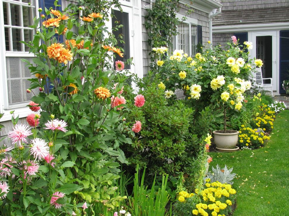 Flowers That Start with a with Traditional Landscape Also Annuals Dahlias Flower Gardens Lush Garden Marigolds Perennial Gardens Tall Garden Yellow Annuals