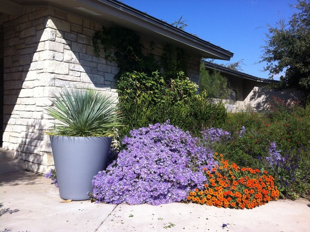 Full Size Mattress Measurements with Contemporary Landscape  and Contemporary Texas Garden Native Plan Fall Aster Fall Blooms Native Plants Perennials Zinneas