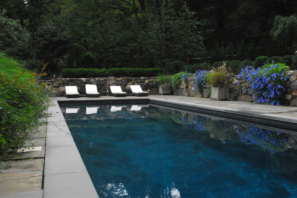 Gardner Pool Plastering   Contemporary Pool  and Chaise Lounge Contemporary Swimming Pool Custom Gunite Swimming Pool Lap Pool Patio Furniture Pavers Planters Shrubs Stone Wall Stone Walls Unopiu Sun Lounger
