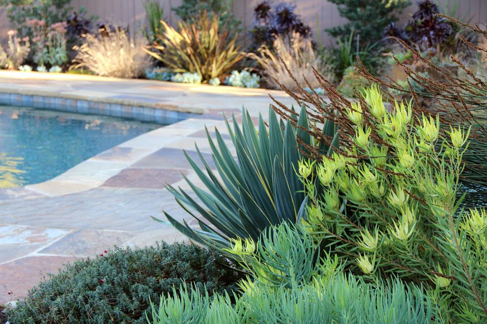 Green Acres Roseville   Contemporary Landscape  and Drought Tolerant Dry Garden Flagstone Meadow Ornamental Grass Palos Verdes Plants Pool Stone Stone Path Stone Patio Succulents