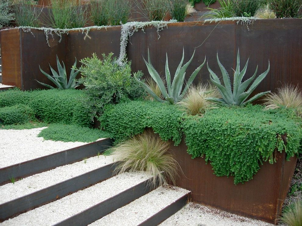 Green Acres Roseville   Modern Landscape  and Cor Ten Steel Grasses Gravel Groundcover Pebbles Retaining Wall Stairs Succulent