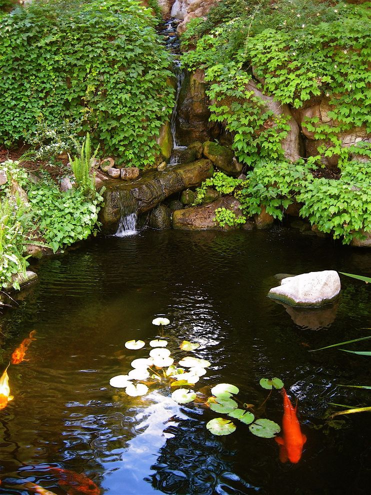 Grotto Boston with Traditional Landscape  and Aquatic Garden Boulders Ivy Koi Pond Rocks Water Feature Water Garden Water Lilies Waterfall