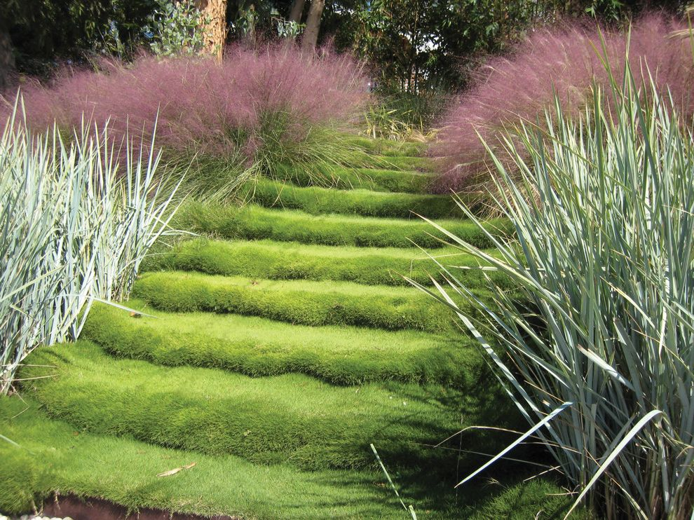 Homemakers Des Moines   Contemporary Landscape  and Grass Grass Step Grass Steps Landscape Lawn Ornamental Grass Path Purple Step