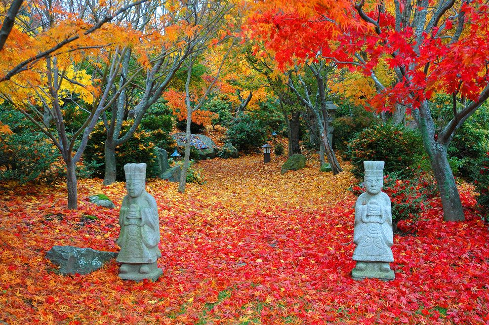 Homer Tree Service   Asian Landscape Also Asian Contemporary Landscape Fall Foliage Fine Gardening Japanese Maples Landscape Construction Landscape Design Maple Leaves Minimalist Landscape Modern Landscape Orange Leaves Red Leaves Statue Yellow Leaves