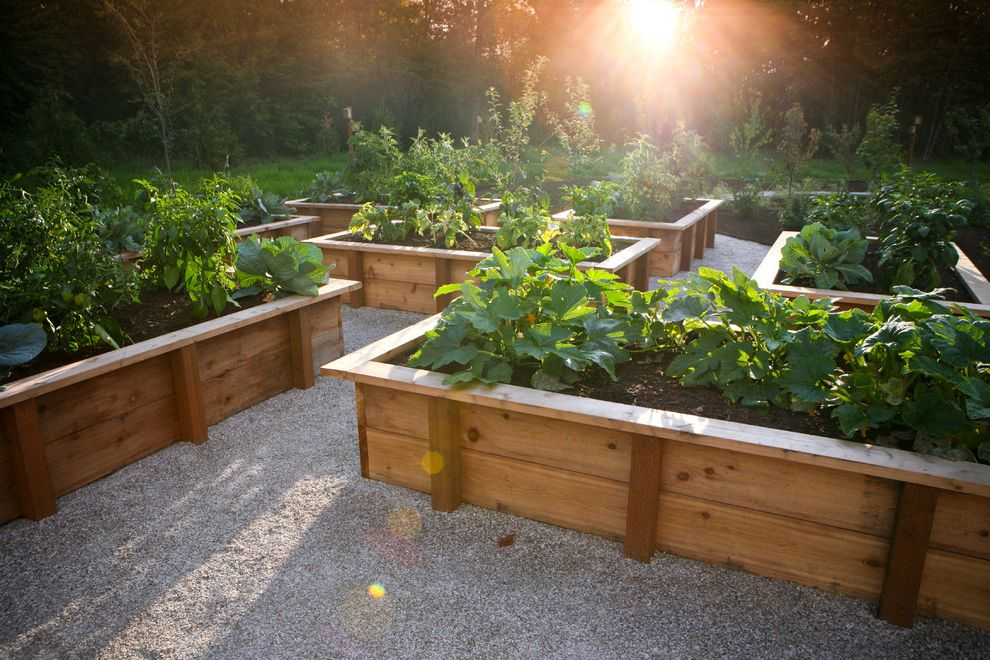 How Long Do Box Springs Last   Rustic Landscape  and Edible Gardens Gravel Raised Beds Rustic Vegetable Gardens