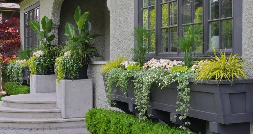 How Long Do Box Springs Last   Traditional Landscape  and Container Plants Dark Wood Trim Entrance Entry Foliage Front Door Grasses Potted Plants Stucco Siding Trailing Plants Window Boxes