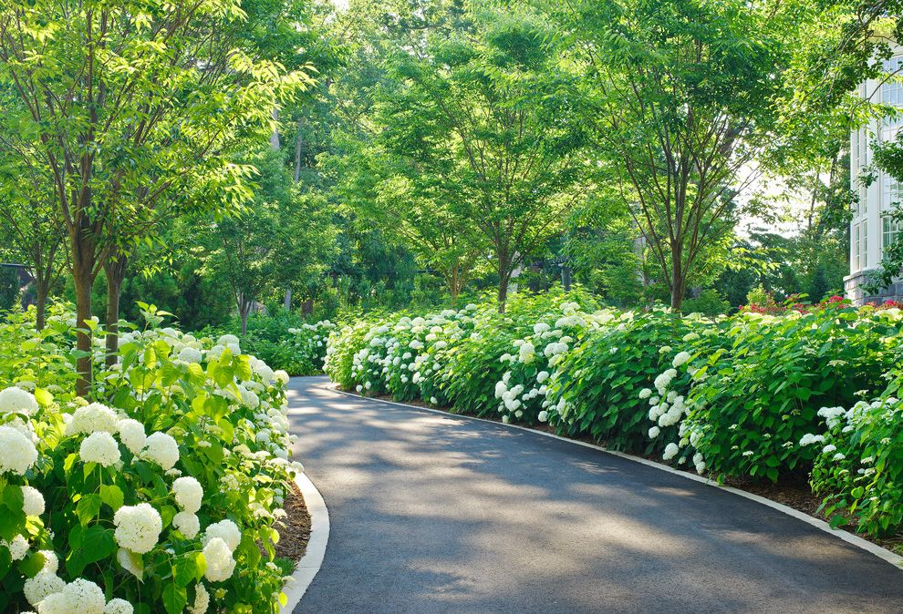 How Much Does an Asphalt Driveway Cost with Traditional Landscape  and Annabelle Hydrangea Curved Driveway Driveway Edging Haha Sinuous Driveway Zelkova