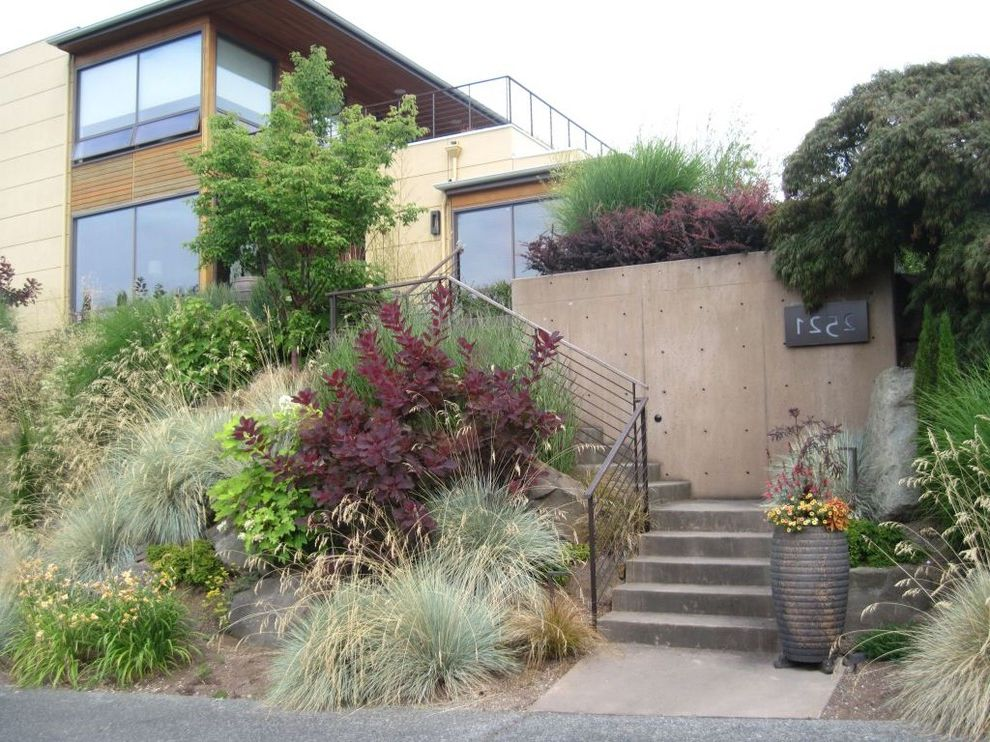 How to Get Rid of Smoke Smell in House   Contemporary Landscape Also Concrete Stair Concrete Wall Container Cotinus Grace Rockery Entry House Number Landscape Metal Railing Red Tall Grasses