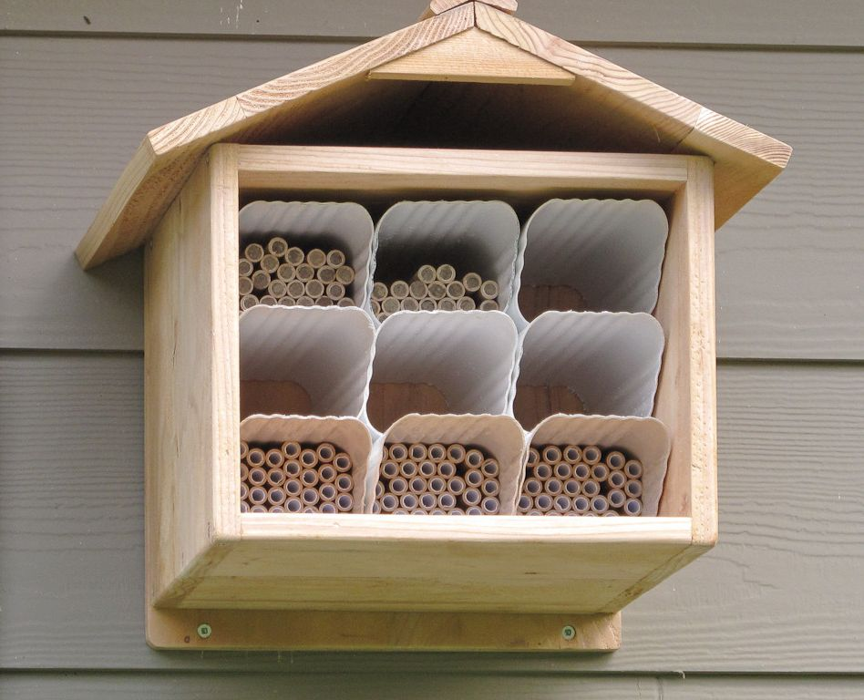 How to Get Rid of the Smell of Cigarettes   Traditional Spaces  and Edible Mason Bees Pollinators Vegetable