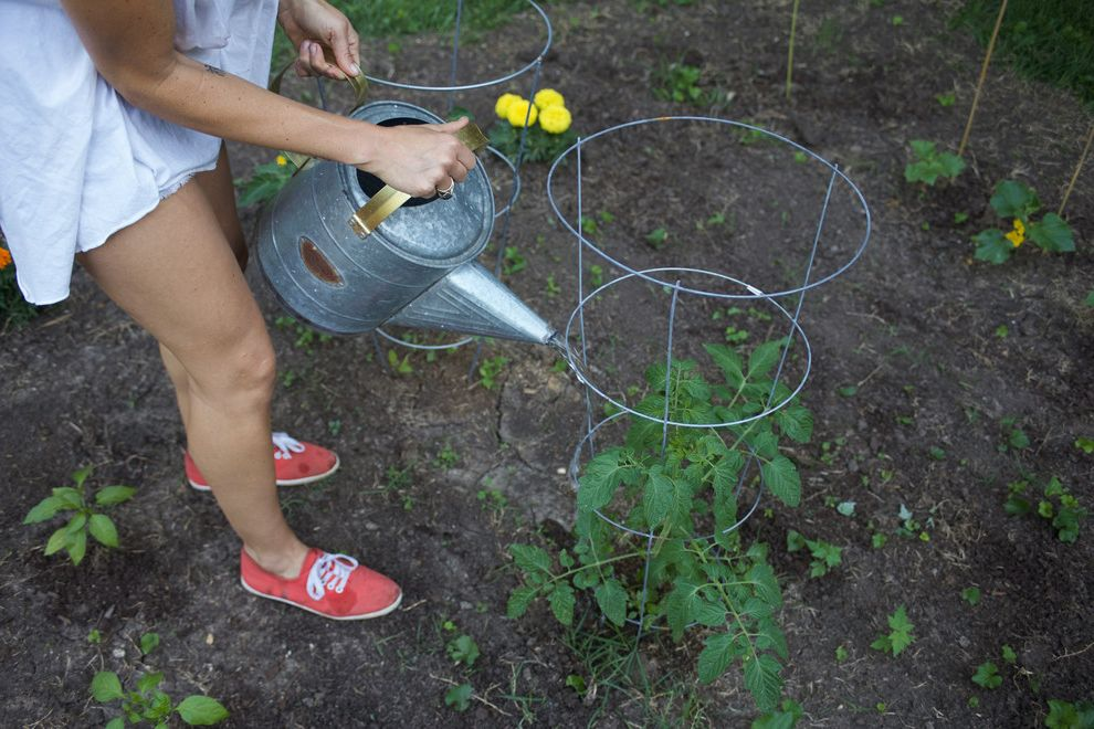 My Houzz: Backyard Farming For A Kansas City Family $style In $location