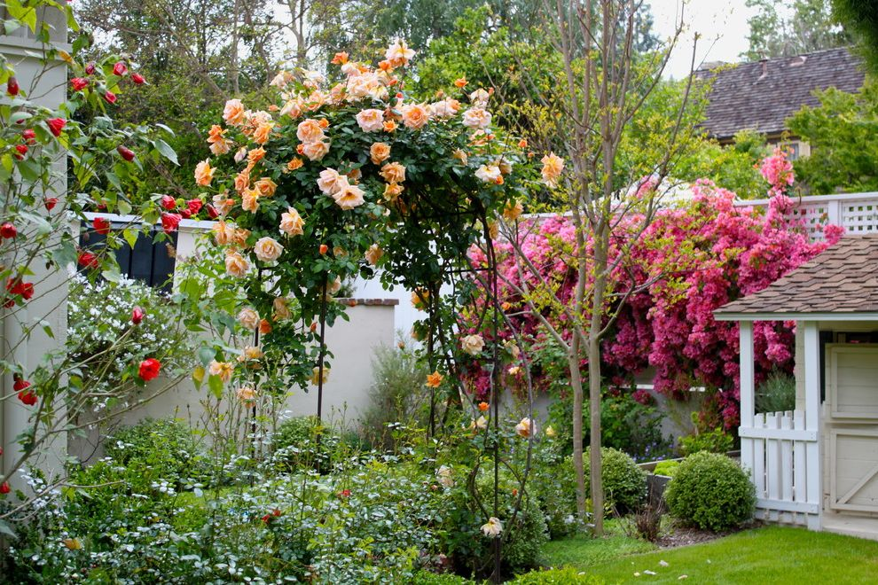 How to Prune Knockout Roses   Mediterranean Landscape  and Arch Trellis Flowerbed Flowers Garden Landscape Outdoor Building Peach Flowers Pink Flowers Red Flowers Shingles Shrubs Trees White Fence White Trellis White Wall