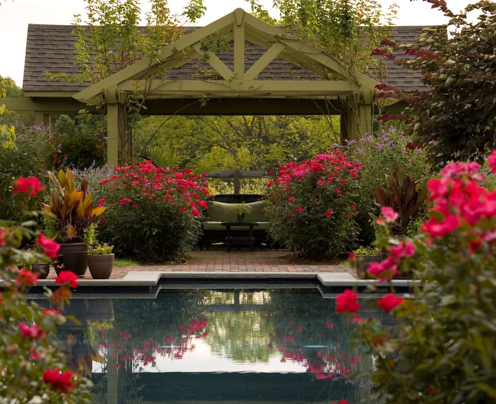 How to Prune Knockout Roses    Spaces  and Bluestone Brick Coping Deck Garden Landscape Landscape Architecture Landscaping Lifestyle Oasis Pergola Pool Reflecting Pool Roses Swimming Pool Water