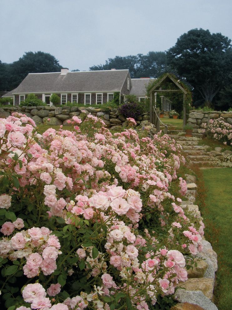 How to Prune Knockout Roses   Traditional Landscape Also Pink Meidiland Roses