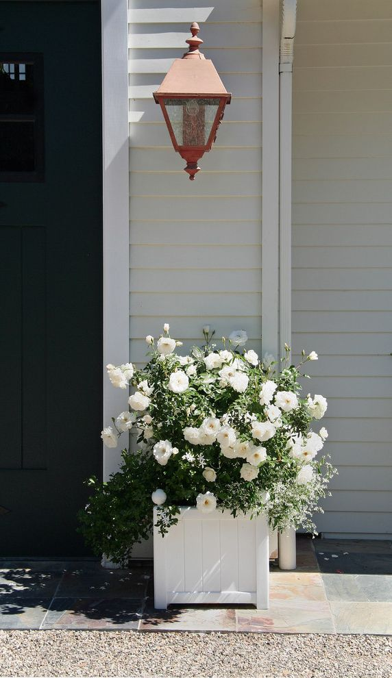 How to Prune Knockout Roses   Traditional Landscape  and Classic Container Iceberg Rose White Planter White Pot White Roses White Roses in White Pot