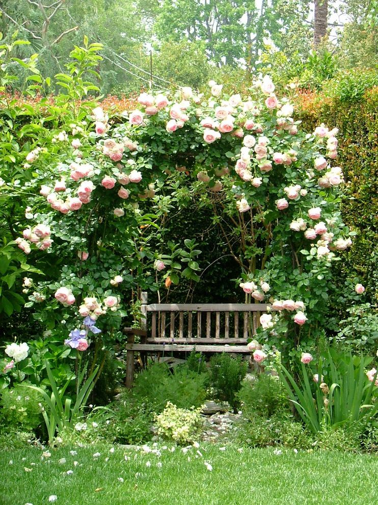 How to Prune Knockout Roses with Shabby Chic Style Landscape Also Arch Climbing Roses English Garden Garden Bench Hedge Iris Roses