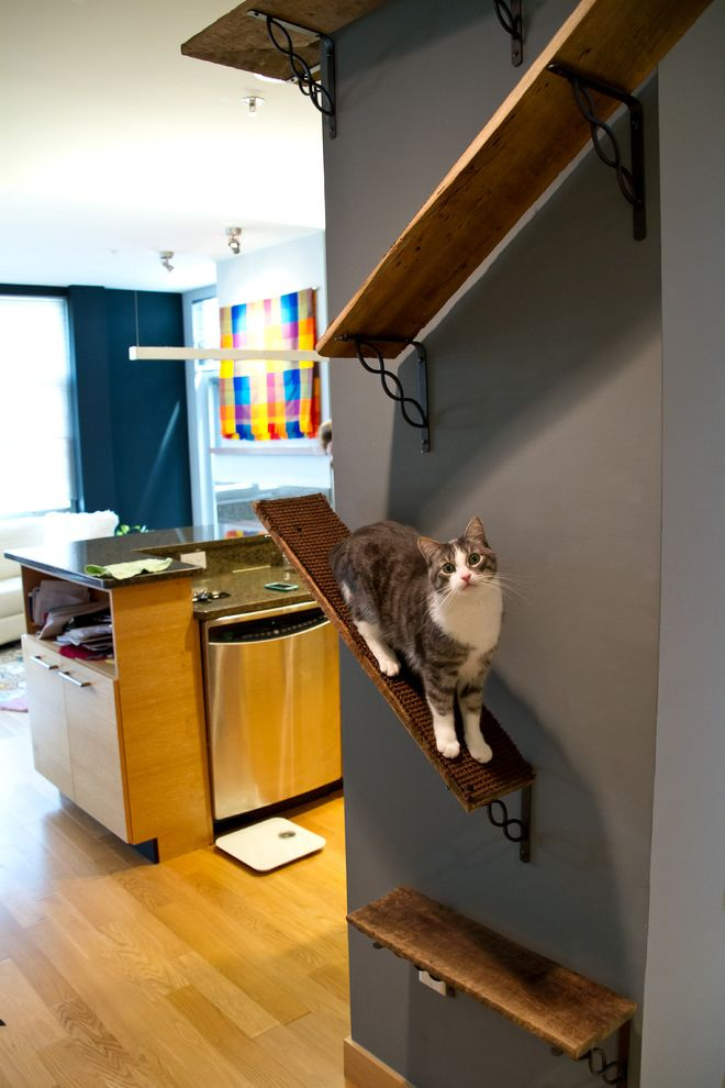 How to Stop Cats From Scratching Carpet with Eclectic Hall Also Cat Ledge Cat Nook Cat Playplace Cat Shelf Cat Toys Cat Wall Light Hardwood Small Condo Wood Shelves