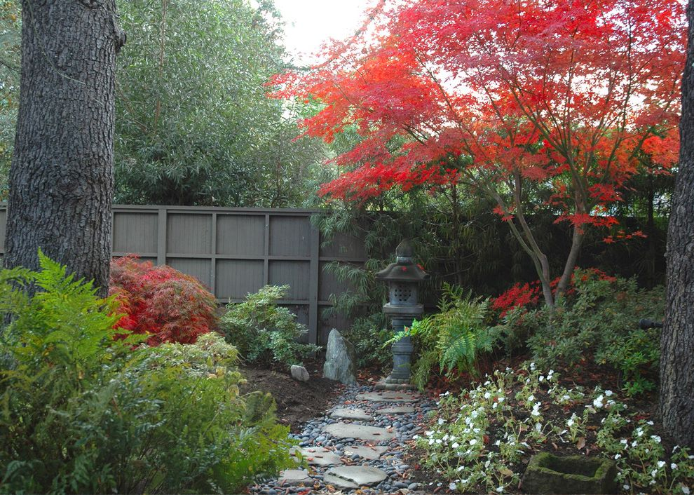 Japanese Blueberry Tree   Asian Landscape  and Asian Garden Art Japanese Maple Path Pavers Red Leaves River Pebbles Walkway Wood Fencing