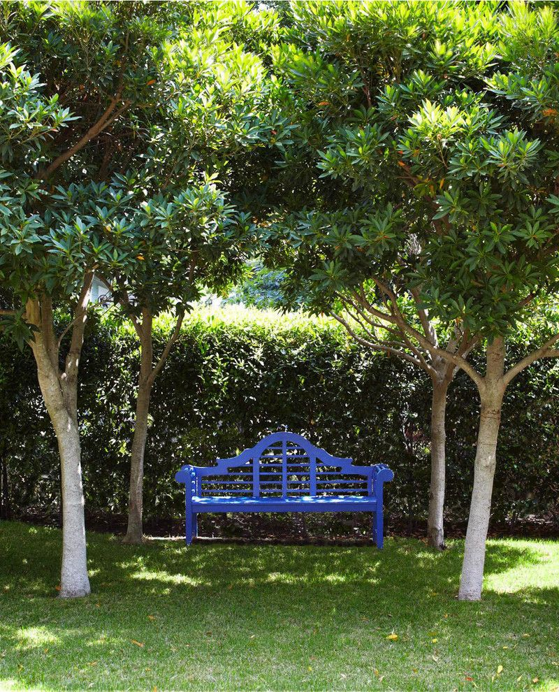 Japanese Blueberry Tree   Farmhouse Landscape Also Farmhouse
