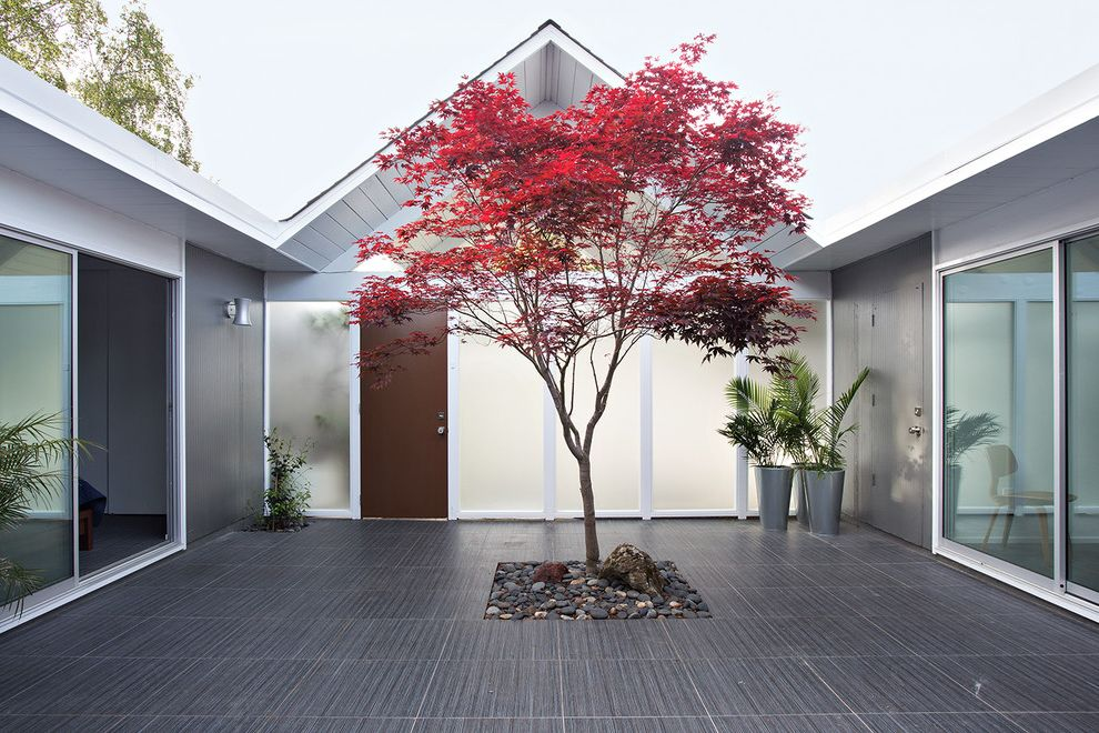 Japanese Blueberry Tree   Midcentury Patio  and Eichler Frosted Glass Gable Roof Maple Tree Outdoor Lighting Potted Plants Remodel Single Family Home Sliding Glass Door