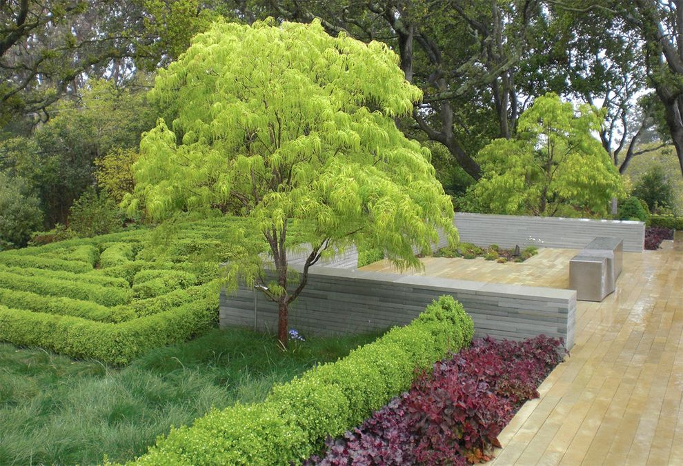 Japanese Blueberry Tree with Contemporary Landscape Also Color Hedge Maze Patio Stone Wall Tree