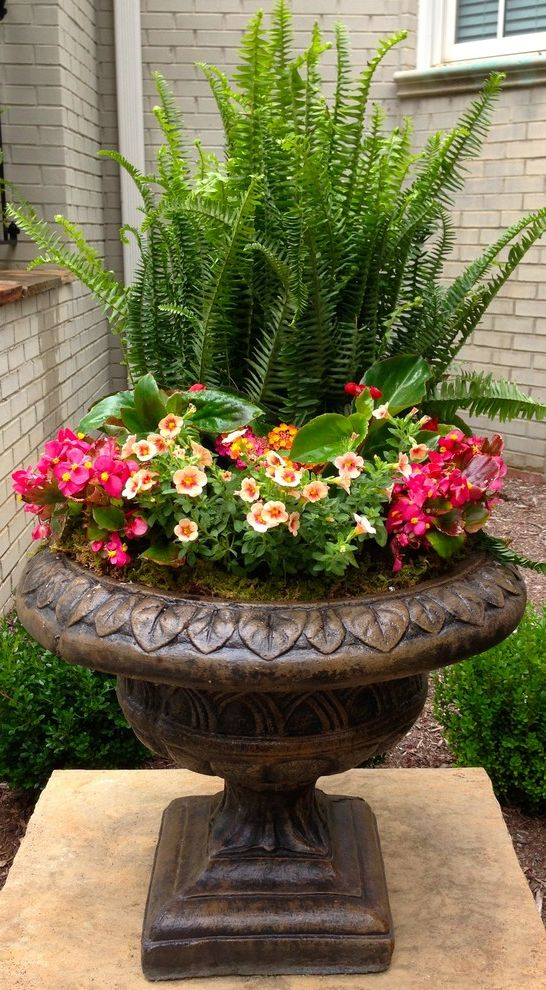 Landscape Supply Greenville Sc with Traditional Landscape  and Colorful Container Garden Container Plants Ferns Greenvillesc Indoor Outdoor Living Pedestal Planter Plant Pots and Planters Roots Spring