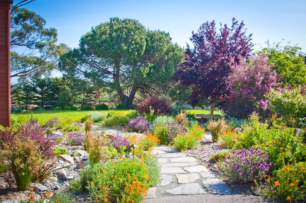 Landscaping Cary Nc   Mediterranean Landscape  and Color Grass Gravel Landscaping Lighting Ideas Natural Landscape Orange Flowers Outdoor Lighting Path Lighting Pathway Purple Flowers Purple Tree Rock Stone Stone Pathway Stone Walkway Trees