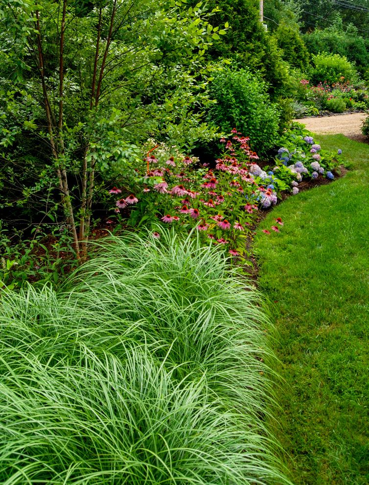 Landscaping Longmont Co with Farmhouse Landscape Also a Blade of Grass Arborvitae Berm Coneflower Echinacea Evergreen Screening Flowering Plants Grass Hydrangea Lawn Ornamental Grass River Birch