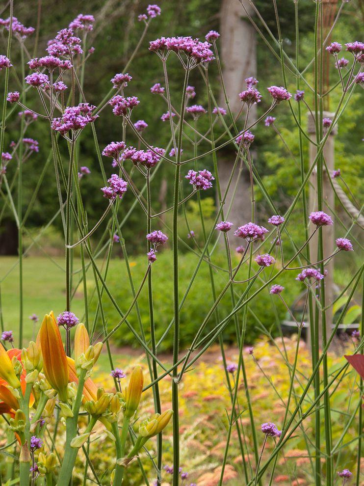 Leaf Filter Reviews    Landscape Also Butterflies Drought Tolerant Tall Verbena Verbena Bonariensis Xeriscaping