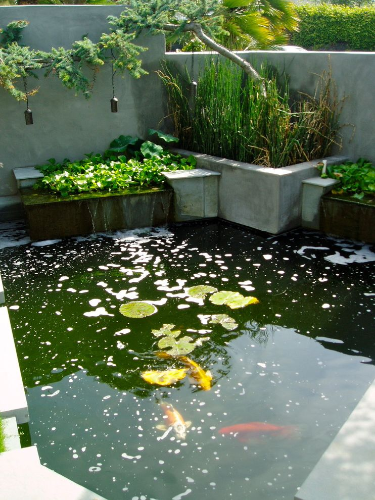 Leaf Filter Reviews with Contemporary Landscape Also Concrete Wall Koi Pond Lily Pad Reeds Retaining Wall Watefall Water Feature
