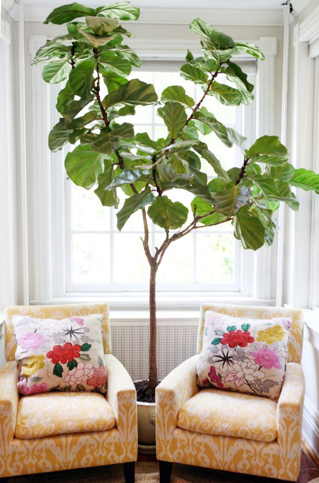 Leaf Filter Reviews with Traditional Family Room  and Colorful Fig Tree Living Room Yellow Chairs
