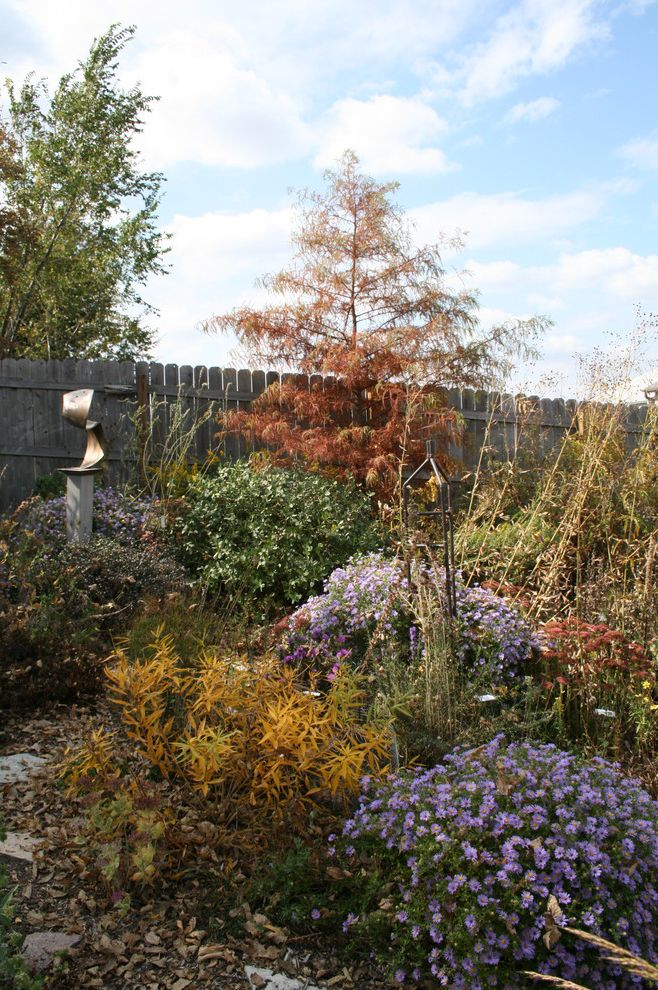 Lowes California Md   Contemporary Landscape  and Cypress Flowers Garden Garden Art Landscape Mass Planting