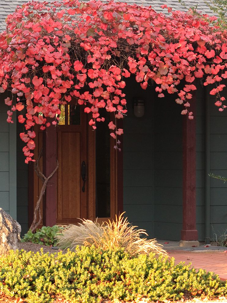 Lowes California Md with Contemporary Entry  and Entrance Entry Fall Color Grape Vine Gray Exterior Gray Siding Red Bush Red Canopy Red Leaves Seasonal Front Door Tall Grass Vine Vitis Rogers Red Wild Grape Wood Beam Wood Front Door Wood Post