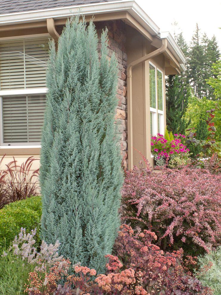 Lowes Medford Oregon   Traditional Landscape  and Blue Chamaecyparis Blue Surprise Foliage Purple Rose Glow Barberry Sedum