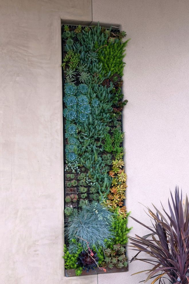 Lowes Oceanside with Contemporary Landscape Also Grasses Green Wall Living Wall Planters Smooth Wall Stucco Succulent Wall Succulents Wall Art Wall Decor