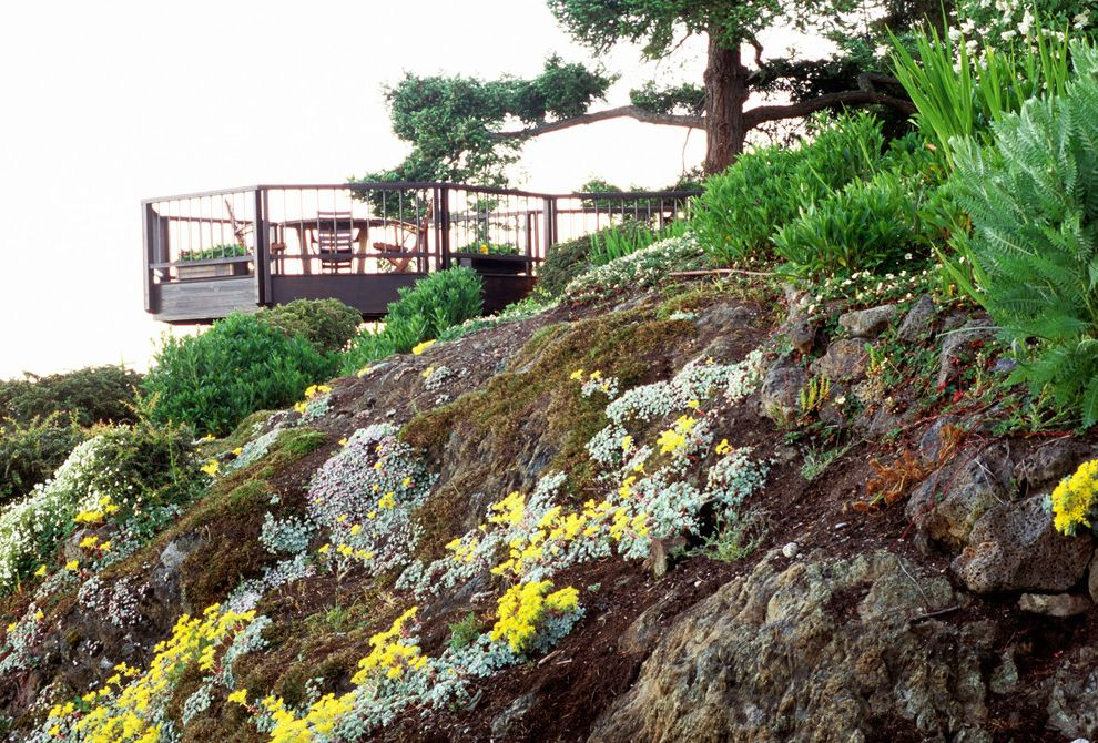 Lowes San Jose with Traditional Landscape Also Cantilever Cliffs Deck Evergreens Ferns Friday Harbor Ground Covers Hillside Island Gardens Company Rocks Slope Steve Schramm Yellow Flowers