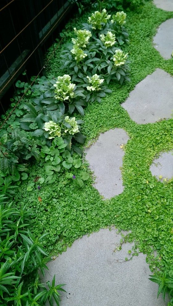 Lowes Ware Ma with Eclectic Landscape  and Bluestone Groundcover