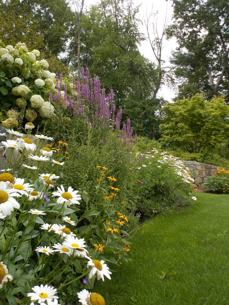 Lynch Landscaping with Traditional Landscape Also Blooming Perennials Daisy Fieldstone Perennial Perennial Gardens Perennial Plants Perennials