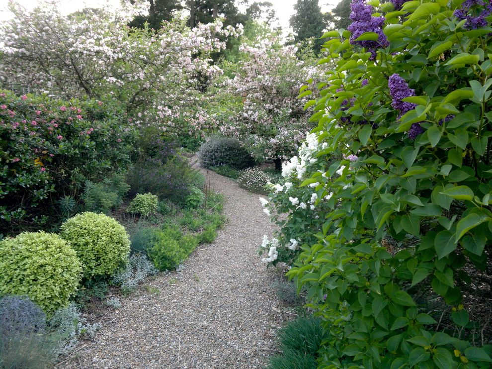 Monarch Specialities   Eclectic Landscape Also Curved Path Evergreens Flowering Trees Garden Path Gravel Path Lilac Pittosporum Golf Ball Purple Flowers Shrubs Sinuous Path Winding Path