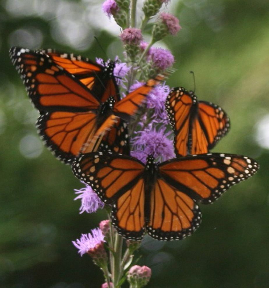Monarch Specialities    Landscape Also